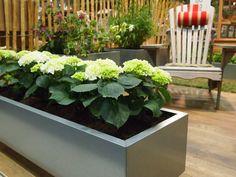 40x120 i galvanisert stål Plants, Design, Patio, Plant, Design Comics, Planting, Planets