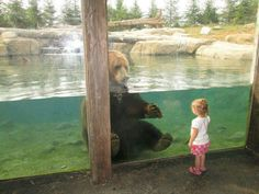 I wonder what that bear is thinking...