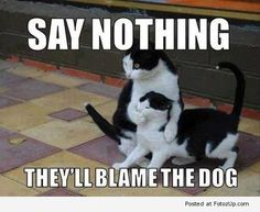 40 Silly And Funny Cats | Picpuddle