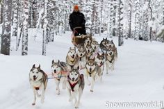 Husky dogs at the Arctic Circle Husky Park in Santa Claus Village in Rovaniemi (Lapland)
