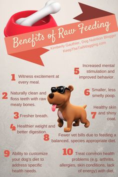 Infographic Sharing the Benefits of Raw Feeding