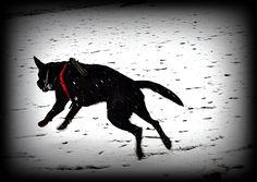 Gideon enjoying Snow :)