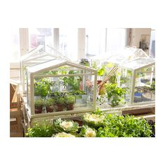 IKEA - SOCKER, Greenhouse, indoor/outdoor white, Provides a good environment for seeds to sprout and plants to grow. Indoor Outdoor, Indoor Plants, Outdoor Spaces, Outdoor Gardens, Outdoor Living, Herb Plants, Plant Pots, Small Gardens, Miniature Greenhouse