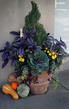 Floral / Fauna Home & Garden Art . Autumn container garden with ornamental cabbage (edible) Ornamental Cabbage, Fall Containers, Succulent Containers, Container Flowers, Purple Plants, Pot Jardin, Fall Planters, Autumn Planter Ideas, Autumn Garden