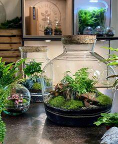 Build A Terrarium, Moss Terrarium, Garden Terrarium, Mini Bonsai, Vivarium, Planted Aquarium, Small Gardens, Aquariums, Mother Nature