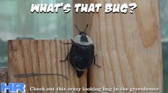 ⟹ INSECT IDENTIFICATION NEEDED, what's that bug #bug
