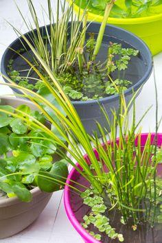 Wil je ook graag een vijver, maar heb je een balkon of klein terras? Geen probleem, een trendy mini vijver maak je makkelijk zelf. Kies een mooie schaal of bak waarin je je mini vijver wilt maken. Bij onze Gek op Groen tuincentra hebben we volop keuze in waterdichte schalen van kunststof tot zink. Je kunt de mini vijver gewoon vullen met kraanwater en doe vervolgens verschillende drijfplanten e…