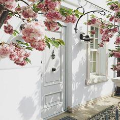 #white #frontdoor #flowers