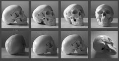 skull_reference_images_by_t_tiger-d3dypva.jpg 1,248×641 pixels