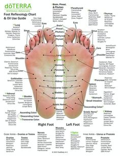 Hand & Foot reflexology chart indicating possible essential oil uses for the var. - Hand & Foot reflexology chart indicating possible essential oil uses for the various hand and feet r - Essential Oil Uses, Doterra Essential Oils, Essential Oil Chart, Essential Oil Supplies, Foot Chart, Reflexology Massage, Foot Reflexology Chart, Reflexology Points, Massage Therapy
