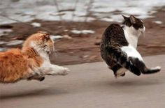 """""""Oh my God- VACCUUM!!! Run! It's every cat for himself!"""" (for more Fiendishly Funny Felines- http://pinterest.com/popeggs/)"""