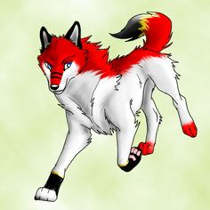 Red, Black, White, and Yellow Wolf