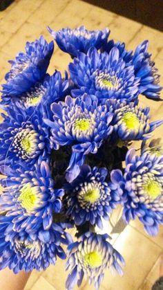 Day 15: cena con i grandoni e le loro mamme... ad accogliermi, un mazzo di fiori blu! ♡carini loro♡