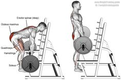 The best workout for back and biceps muscle training which is recommended by The Rock himself. Lat Pulldowns, spider curls, Rackpulls, Underhand barbell rows and many Best Trap Exercises, Compound Exercises, Back Exercises, Training Exercises, Gym Workout Tips, Biceps Workout, Barbell Deadlift, Good Back Workouts, Bicep Muscle