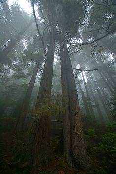 Pacific Northwest | Rainforest #AMERICANAPPAREL #PINATRIPWITHAA