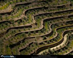 socalcos - old walled terraces in douro valley