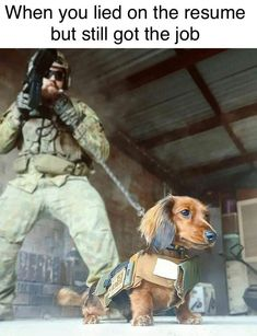 When you lie on your resume but get the job anyway! My Colonel would have done this and been a total badass! Bravest dachshund ever ❤️ Dachshund Funny, Dachshund Puppies, Dachshund Love, Funny Dogs, Cute Puppies, Cute Dogs, Daschund, Animals And Pets, Funny Animals