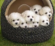 Oh my goodness! A basket of love!