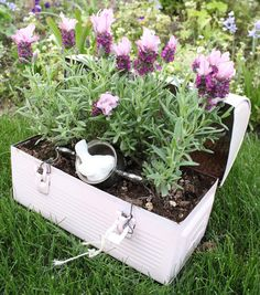 If you want to add some fun to your garden, check out all of these creative planter ideas. Container Flowers, Flower Planters, Container Plants, Container Gardening, Flower Pots, Old Tool Boxes, Vintage Lunch Boxes, Boite A Lunch, Patio Makeover