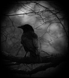 Dark And Mystery