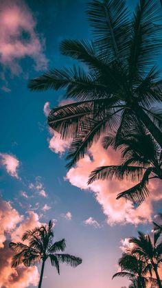 Beautiful beach palms