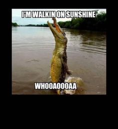 Someone take this alligator to karaoke.