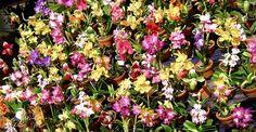 Ce pământ şi ce ghivece le plac orhideelor? | Paradis Verde Tips, Interiors, Plant, Advice, Hacks