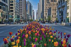 The forecast finally sounds like Spring! What is on your spring in #Chicago bucket list?
