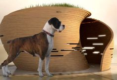 Coolest Dog House Ever