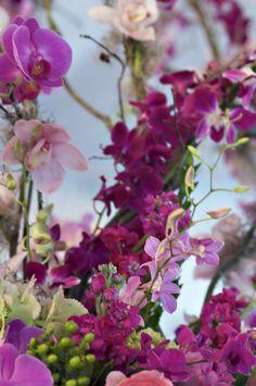 Ahh, orchids are so pretty