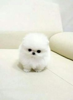 Awww it so cute... But is that even a dog?!