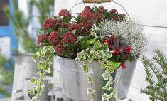 Vaso natalizio fai da te per decorare il balcone | I sempreverdi Christmas Is Coming, Green, Flowers, Google, Blog, Vintage, Gardens, Blogging, Vintage Comics