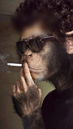 """I didn't choose the thug life. The thug life chose me. Monkey Pictures, Funny Animal Pictures, Animals And Pets, Funny Animals, Cute Animals, Monkey Wallpaper, Monkey Art, Animal Heads, Cool Art"