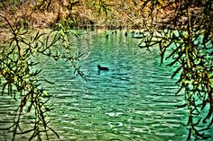 One Duck! Whitewater Preserve, One Duck, Preserves, Preserve, Preserving Food, Butter, Pickling