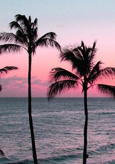pastel sunset with palm trees. Pastel bring out the harsh yet softness of the palm trees. The different colours contrast with each other. Fringed leaves and and textured trunks. Beautiful World, Beautiful Places, Beautiful Ocean, Beautiful Sunrise, Pink Sunset, Pink Sky, Pink Blue, Miami Sunset, Miami Beach