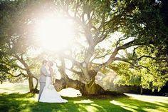 San Luis Obispo Wedding by We Heart Photography. Love this tree!