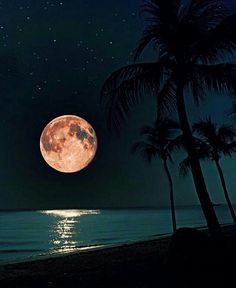 Uploaded by Find images and videos about summer, nature and beach on We Heart It - the app to get lost in what you love. Moonlight Photography, Moon Photography, Travel Photography, Moon Photos, Moon Pictures, Best Vacation Spots, Best Vacations, Moon Beach, Shoot The Moon