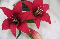 darkred lilies individual flowers
