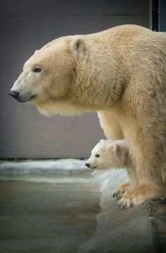 A Mothers Pride!