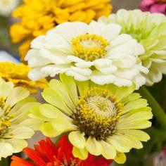 Best Annual Flowers for Full Sun