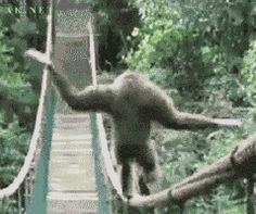 Animals Walking animated GIF