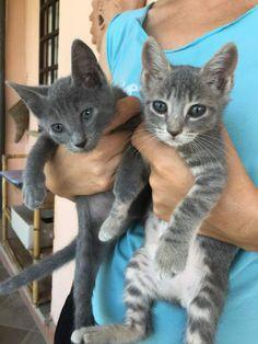 Gattini,mici,gatti in regalo cercano casa