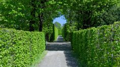 Schoenbrunn Garden Wander, Sidewalk, Walkways, Pavement, Curb Appeal