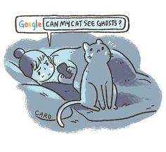 ¿Mi gato puede ver fantasmas?
