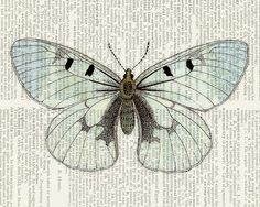 butterfly - transparent vintage butterfly printed on page from vintage dictionary via Etsy