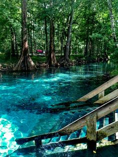 Ginnie Springs in High Springs FL. I love staircases that lead into the river! Ginnie Springs in High Springs, FL. I love staircases that lead into the river! Ginnie Springs i Vacation Places, Dream Vacations, Vacation Ideas, The Places Youll Go, Cool Places To Visit, Beautiful Places To Travel, Beautiful Vacation Spots, Florida Travel, Florida Usa