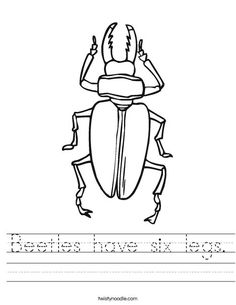 examples of arthropods phylum arthropoda pinterest zoology. Black Bedroom Furniture Sets. Home Design Ideas