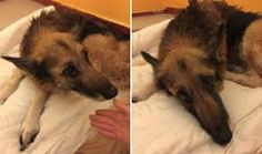 Heartbreaking open letter penned to owner who abandoned dying dog on street