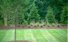 Norway Spruce are one of the best evergreen trees for privacy. Stagger them for a natural look. Add some ornamental trees in front.the greenery behind will really make them pop. Perennials in the front layer can provide interest throughout all the seaso Types Of Evergreen Trees, Evergreen Trees For Privacy, Privacy Trees, Privacy Plants, Privacy Landscaping, Home Landscaping, Backyard Privacy, Evergreen Trees Landscaping, Evergreen Landscape