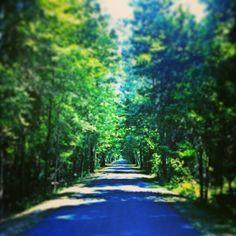 Trail in Wakulla County, Fl